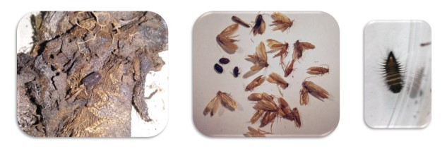 analizy-entomologiczne