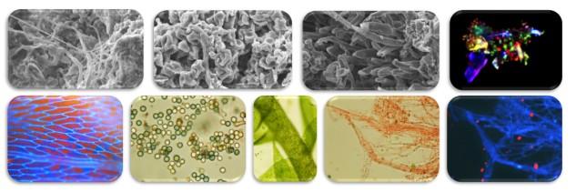 analizy-mikroskopowe
